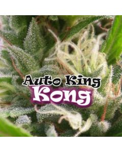 Auto King Kong - Dr. UNDERGROUND