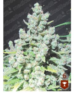 Malakoff- MEDICAL SEEDS
