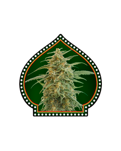 Auto Gorilla - 00 SEEDS BANK