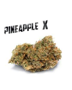 Pineapple X - PHAT PANDA